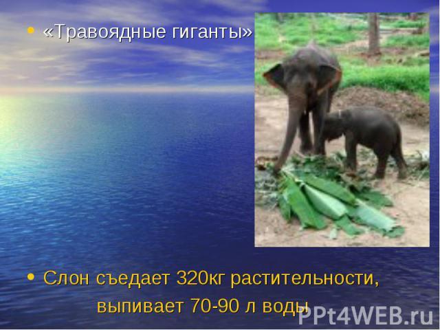 «Травоядные гиганты» Слон съедает 320кг растительности, выпивает 70-90 л воды