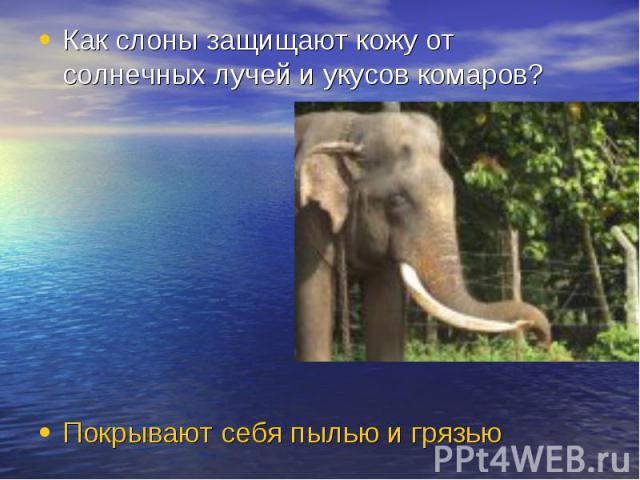 Как слоны защищают кожу от солнечных лучей и укусов комаров? Покрывают себя пылью и грязью