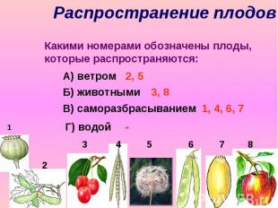 Распространение плодов Какими номерами обозначены плоды, которые распространяютс