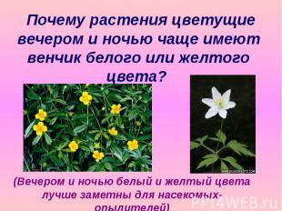 Почему растения цветущие вечером и ночью чаще имеют венчик белого или желтого цв