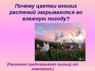 Почему цветки многих растений закрываются во влажную погоду? (Растения предохран
