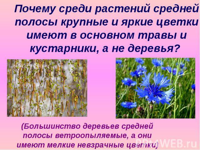 Почему среди растений средней полосы крупные и яркие цветки имеют в основном травы и кустарники, а не деревья? (Большинство деревьев средней полосы ветроопыляемые, а они имеют мелкие невзрачные цветки)