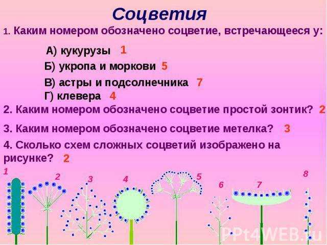 Соцветия 1. Каким номером обозначено соцветие, встречающееся у: А) кукурузы Б) укропа и моркови В) астры и подсолнечника Г) клевера 2. Каким номером обозначено соцветие простой зонтик? 3. Каким номером обозначено соцветие метелка? 4. Сколько схем сл…
