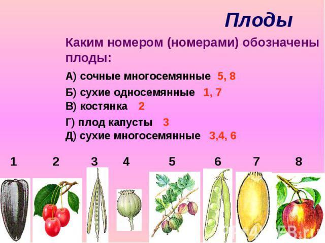 Плоды Каким номером (номерами) обозначены плоды: А) сочные многосемянные Б) сухие односемянные В) костянка Г) плод капусты Д) сухие многосемянные