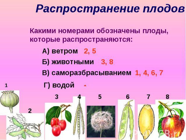 Распространение плодов Какими номерами обозначены плоды, которые распространяются: А) ветром Б) животными В) саморазбрасыванием Г) водой