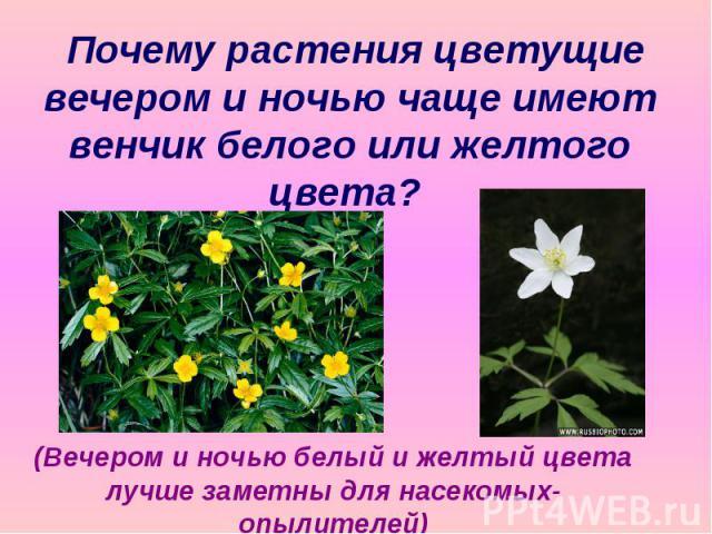 Почему растения цветущие вечером и ночью чаще имеют венчик белого или желтого цвета? (Вечером и ночью белый и желтый цвета лучше заметны для насекомых-опылителей)