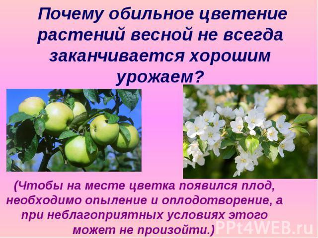 Почему обильное цветение растений весной не всегда заканчивается хорошим урожаем? (Чтобы на месте цветка появился плод, необходимо опыление и оплодотворение, а при неблагоприятных условиях этого может не произойти.)