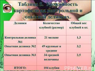 Таблица 5. Урожайность картофеля на контрольной и опытной делянках.