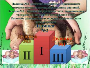Делянка №2- растения выращены с применением птичьего помета и настоя перегнивших