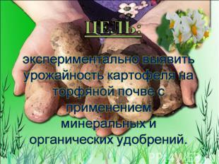 ЦЕЛЬ: экспериментально выявить урожайность картофеля на торфяной почве с примене
