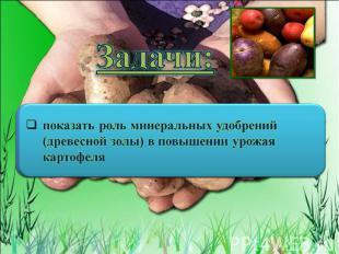 Задачи: показать роль минеральных удобрений (древесной золы) в повышении урожая