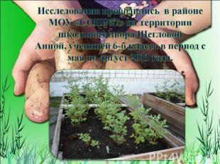 Исследования проводились в районе МОУ «СОШ№7» на территории школьного двора Щегл