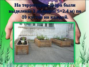 На территории двора были выделены 3 делянки(S=2.4 м) по 10 кустов на каждой.