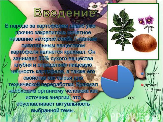 Введение. В народе за картофелем давно уже прочно закрепилось почетное название «второй хлеб». Главным питательным веществом картофеля является крахмал. Он занимает 80% сухого вещества клубня и определяет пищевую ценность картофеля, а также его свой…