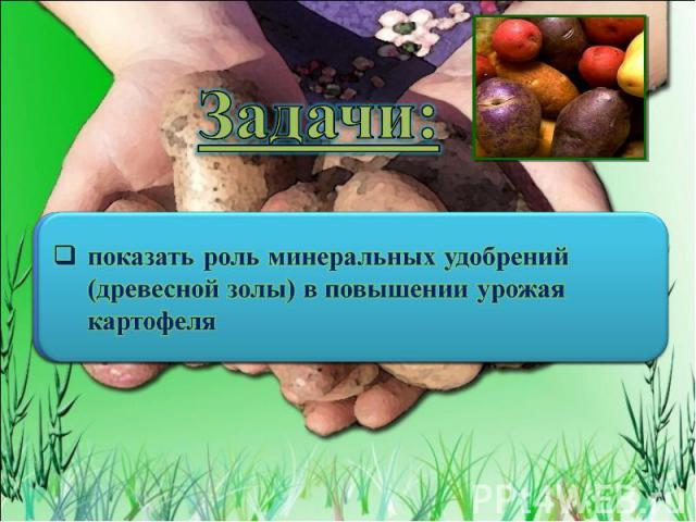 Задачи: показать роль минеральных удобрений (древесной золы) в повышении урожая картофеля