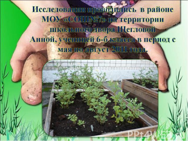 Исследования проводились в районе МОУ «СОШ№7» на территории школьного двора Щегловой Анной, ученицей 6-б класса в период с мая по август 2011 года.