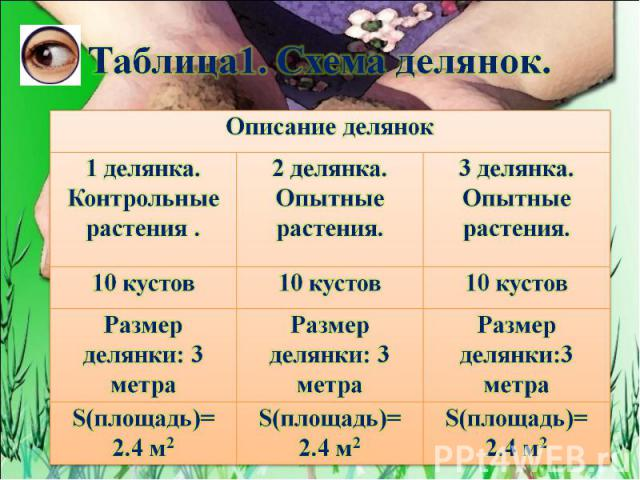 Таблица1. Схема делянок.
