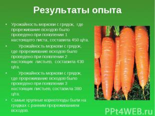 Результаты опыта Урожайность моркови с грядок, где прореживание всходов было про