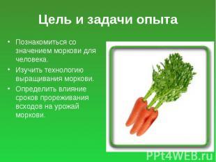 Цель и задачи опыта Познакомиться со значением моркови для человека. Изучить тех