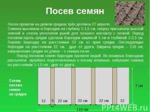 Посев семян Посев провели на девяти грядках трёх делянок 27 апреля. Семена высев