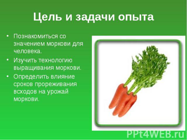 Цель и задачи опыта Познакомиться со значением моркови для человека. Изучить технологию выращивания моркови. Определить влияние сроков прореживания всходов на урожай моркови.