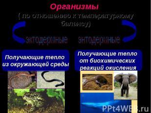 Организмы ( по отношению к температурному балансу) Получающие тепло из окружающе