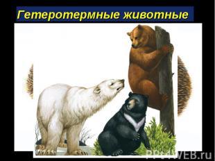 Гетеротермные животные