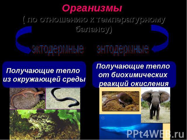 Организмы ( по отношению к температурному балансу) Получающие тепло из окружающей среды Получающие тепло от биохимических реакций окисления