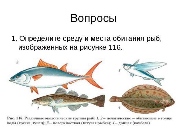 Вопросы 1. Определите среду и места обитания рыб, изображенных на рисунке 116.