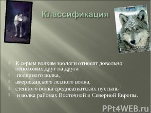 Классификация К серым волкам зоологи относят довольно непохожих друг на друга по