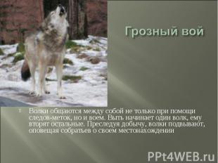 Грозный вой Волки общаются между собой не только при помощи следов-меток, но и в