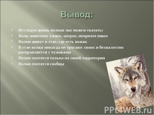 Вывод: Исследуя жизнь волков мы можем сказать: Волк-животное умное, хитрое, неприхотливое Волки живут в стае, где есть вожак В стае волки никогда не трогают своих и безжалостно расправляется с чужаками Волки охотятся только на своей территории Волки…