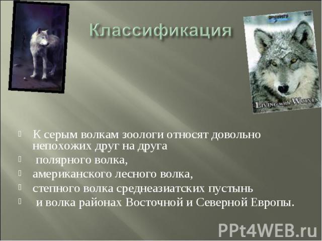 Классификация К серым волкам зоологи относят довольно непохожих друг на друга полярного волка, американского лесного волка, степного волка среднеазиатских пустынь и волка районах Восточной и Северной Европы.