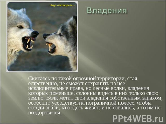 Владения Скитаясь по такой огромной территории, стая, естественно, не сможет сохранить на нее исключительные права, но лесные волки, владения которых поменьше, склонны видеть в них только свою землю. Волк метит свои владения собственным запахом, осо…