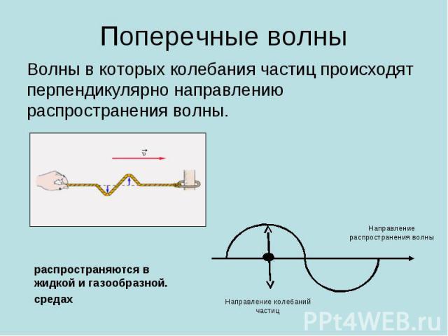 Поперечные волны Волны в которых колебания частиц происходят перпендикулярно направлению распространения волны. распространяются в жидкой и газообразной. средах