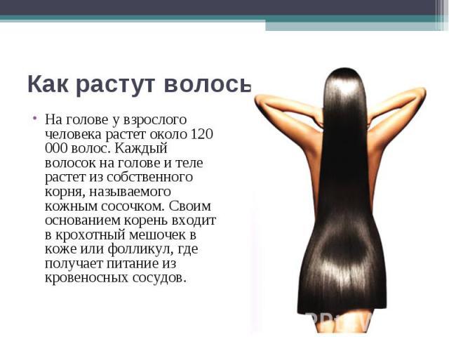 Как растут волосы На голове у взрослого человека растет около 120 000 волос. Каждый волосок на голове и теле растет из собственного корня, называемого кожным сосочком. Своим основанием корень входит в крохотный мешочек в коже или фолликул, где получ…