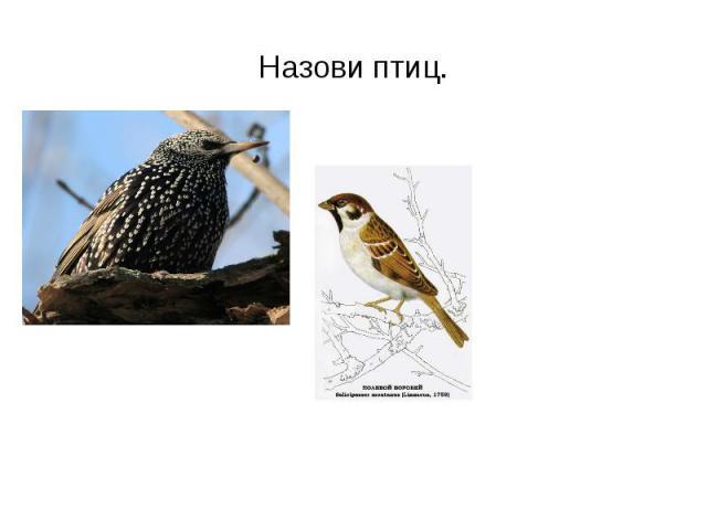 Назови птиц.