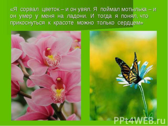 «Я сорвал цветок – и он увял. Я поймал мотылька – и он умер у меня на ладони. И тогда я понял, что прикоснуться к красоте можно только сердцем»