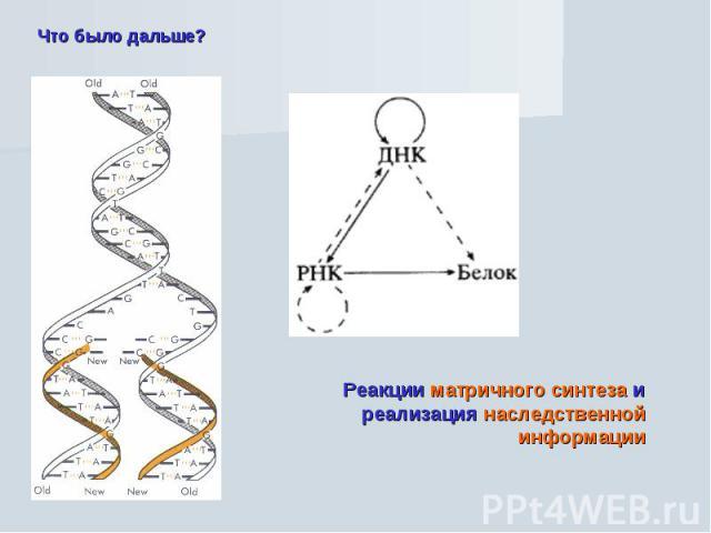 Что было дальше? Реакции матричного синтеза и реализация наследственной информации
