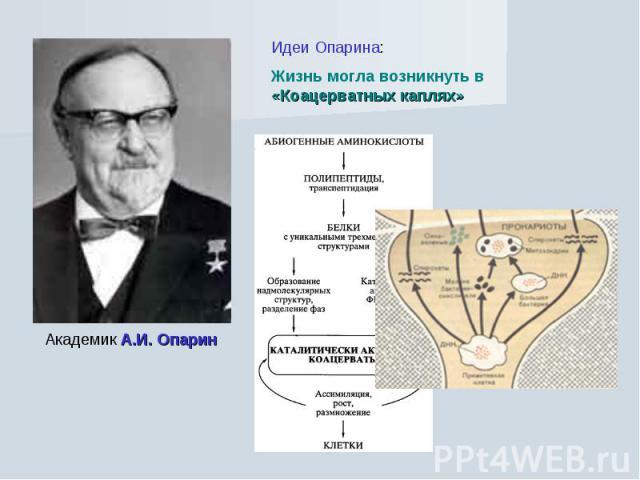 Идеи Опарина: Жизнь могла возникнуть в «Коацерватных каплях» Академик А.И. Опарин
