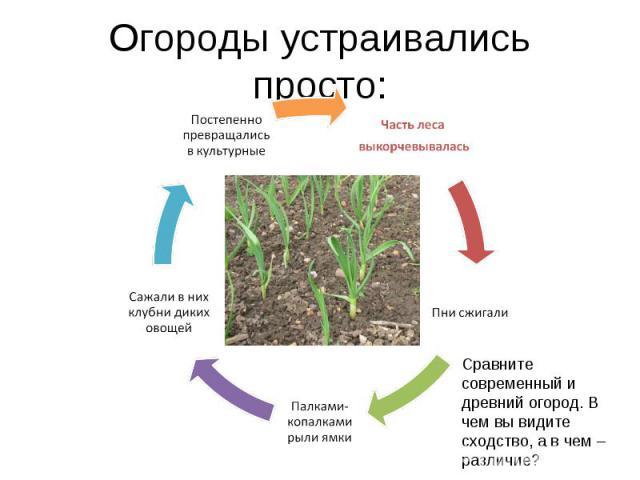 Огороды устраивались просто:Сравните современный и древний огород. В чем вы видите сходство, а в чем – различие?