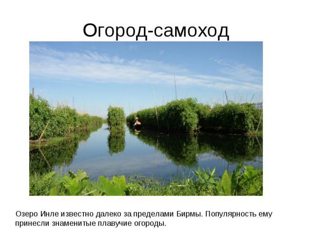 Огород-самоходОзеро Инле известно далеко за пределами Бирмы. Популярность ему принесли знаменитые плавучие огороды.