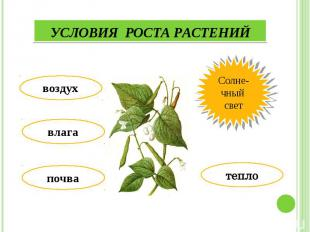 Условия роста растений