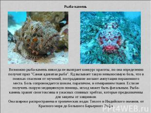 Рыба-камень Возможно рыба-камень никогда не выиграет конкурс красоты, но она опр