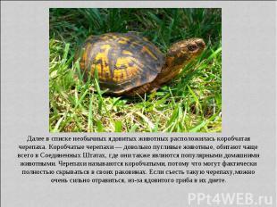 Далее в списке необычных ядовитых животных расположилась коробчатая черепаха. Ко