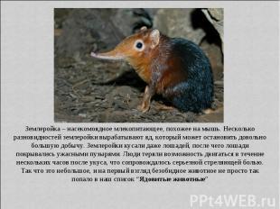 Землеройка – насекомоядное млекопитающее, похожее на мышь. Несколько разновиднос