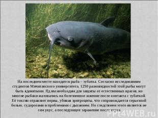 На последнем месте находится рыба – зубатка. Согласно исследованиям студентов Ми