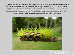 Издавна известно, что множество насекомых и гусениц вызывают раздражения и ожоги