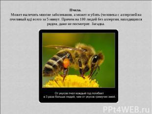 Пчела. Может вылечить многие заболевания, а может и убить (человека с аллергией