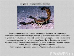 Скорпион Лейурус квинкестриатус Вопреки широко распространенному мнению, большин
